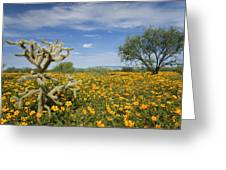 Mexican Golden Poppy Flowers And Cactus Greeting Card