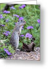 Mexican Ground Squirrel In Wildflowers Greeting Card