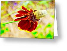 Mexican Hat Greeting Card