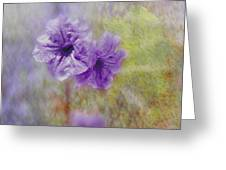 Mexican Petunia Greeting Card