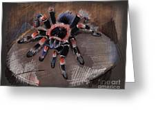 Mexican Redknee Tarantula Greeting Card