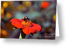 Mexican Sunflower Open House Party Time Greeting Card