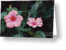 Mexico Pink Beauties By Tom Ray Greeting Card