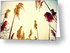 #mgmarts #sunset #bright #beautiful Greeting Card