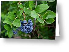 Michigan Blueberries Greeting Card