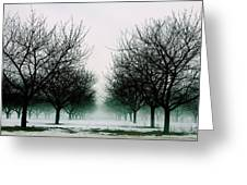 Michigan Cherry Trees In Winter Greeting Card