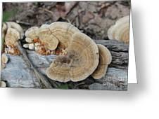 Michigan Fungus 2 Greeting Card