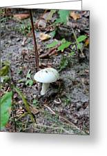 Michigan Fungus 3 Greeting Card
