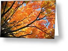 Michigan Sugan Maple Greeting Card