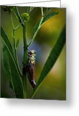 Micro Environment  Greeting Card