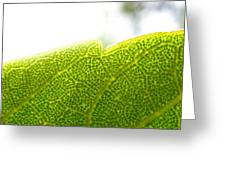 Micro Leaf Greeting Card