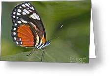 Micro Wings... Greeting Card