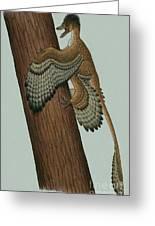 Microraptor Gui, A Small Theropod Greeting Card