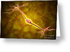 Microscopic View Of A Bipolar Neuron Greeting Card by Stocktrek Images