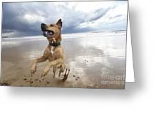 Mid-air Beach Dog Greeting Card by Eldad Carin