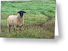 Middle Child - Blackfaced Sheep Greeting Card