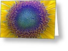 Middle Of Sunflower Close-up Greeting Card
