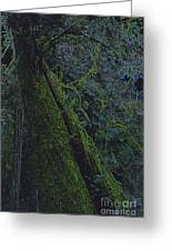 Midnight Tree By Jrr Greeting Card