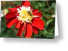 Midsummer Beauty Greeting Card