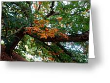 Mighty Fall Oak #1 Greeting Card