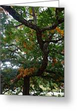 Mighty Fall Oak #2 Greeting Card