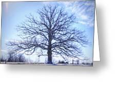 Mighty Oak In Winter Greeting Card
