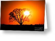 Mighty Oak Sunset Greeting Card