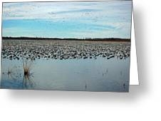 Migrating Geese Greeting Card