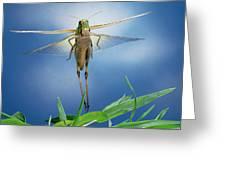 Migratory Locust Flying Greeting Card