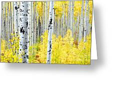 Miles Of Gold Greeting Card by The Forests Edge Photography - Diane Sandoval