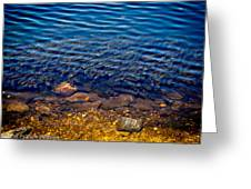 Milfoil Invasion Greeting Card