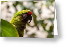 Military Macaw Greeting Card