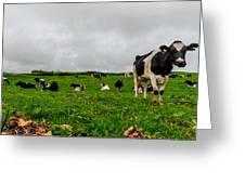 Milk Nature Nose Greeting Card