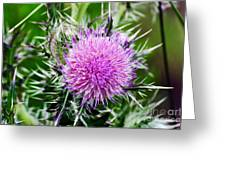 Milk Thistle Greeting Card