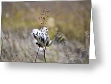 Milk Weed Seed Greeting Card