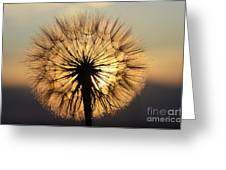 Beauty Of The Dandelion 2 Greeting Card