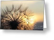 Milkweed 2 Greeting Card