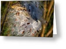 Milkweed 3 Greeting Card