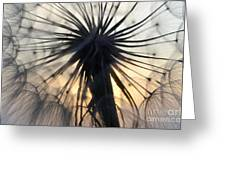 Beauty Of The Dandelion 1 Greeting Card