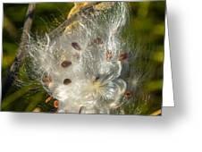 Milkweed 4 Greeting Card