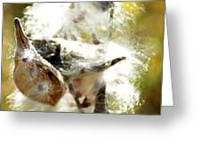 Milkweed Blowout Greeting Card