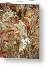 Milkweed In Autumn Greeting Card