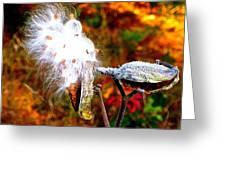 Milkweed Greeting Card