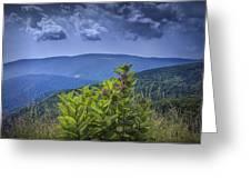 Milkweed Plants Along The Blue Ridge Parkway Greeting Card