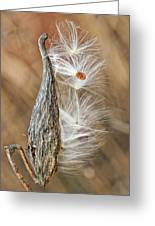 Milkweed Pod And Seeds Greeting Card
