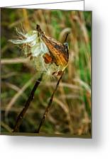Milkweed Pod Greeting Card