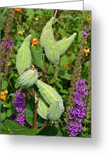 Milkweed Pods Greeting Card
