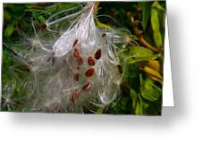 Milkweed Seeds Greeting Card