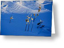 Milkweeds In The Snow Greeting Card