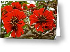 Milkwood Tree Blossoms In Donkin Reserve In Port Elizabeth-south Africa Greeting Card